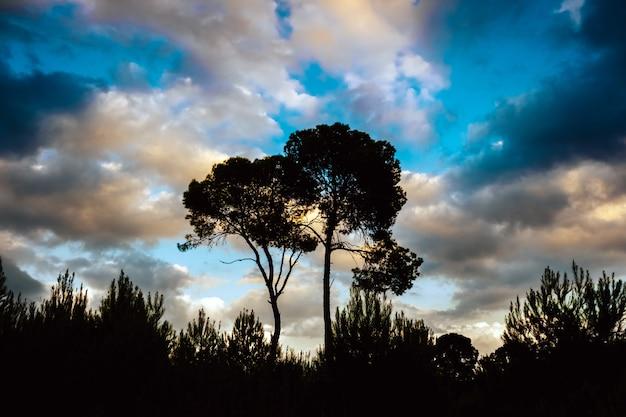曇り空を背景に2つの孤独な木が丘の上に美しく壮大な夕日