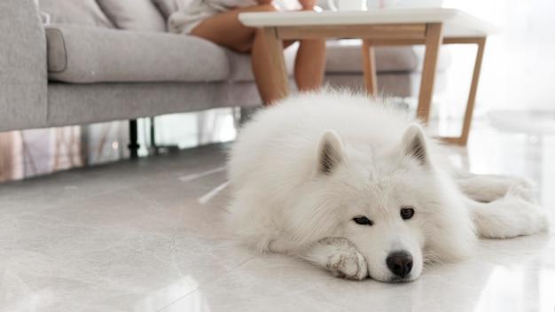 아름답고 푹신한 흰 개