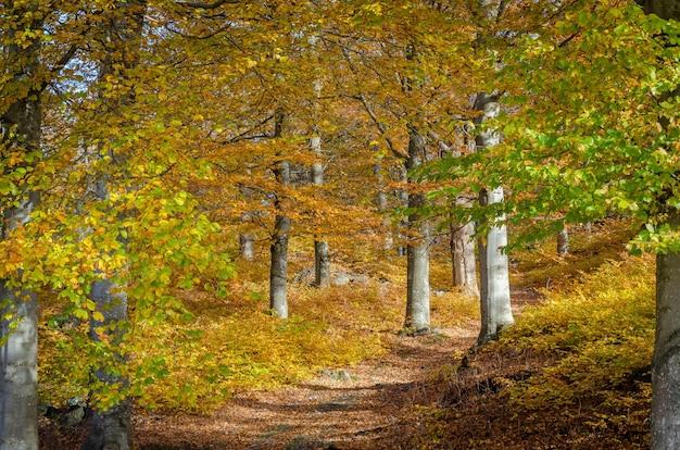 가을 동안 천천히 금으로 변하는 숲의 아름답고 매혹적인 샷