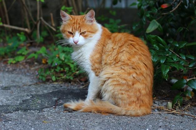아름답고 슬픈 노숙자 고양이