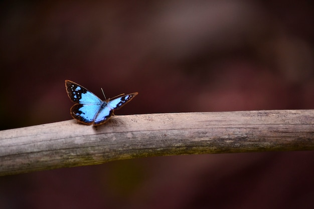 Beautiful animal butterfly blue colorful