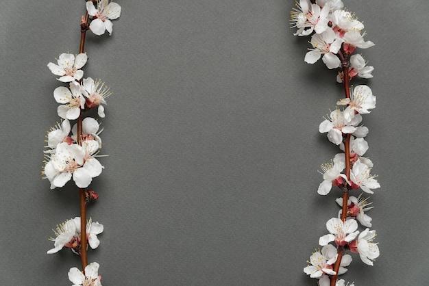 Красивые ветви цветения абрикоса на сером фоне. скопируйте пространство. фон. макет