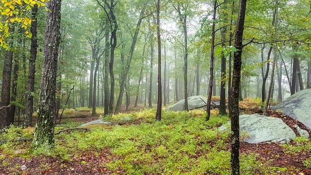 Красивая территория в лесу с высокими деревьями