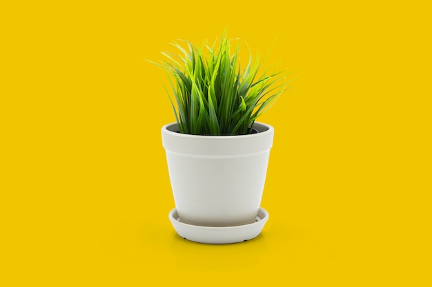 Beautiful artificial green grass in pots ceramic isolated on yellow background.