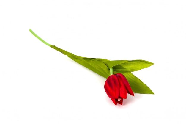 Красивый искусственный тюльпан