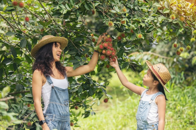 Красивые азиатские мать и дочь в саде плодов рамбутана аграрном. праздничные люди путешествуют по природе.