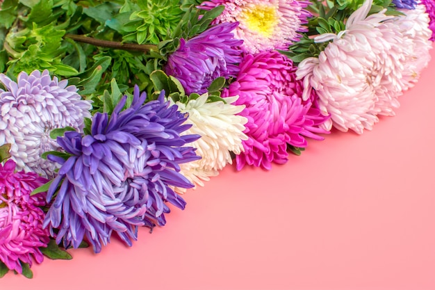 Beautiful aster flowers on pastel pink color background. flat lay,