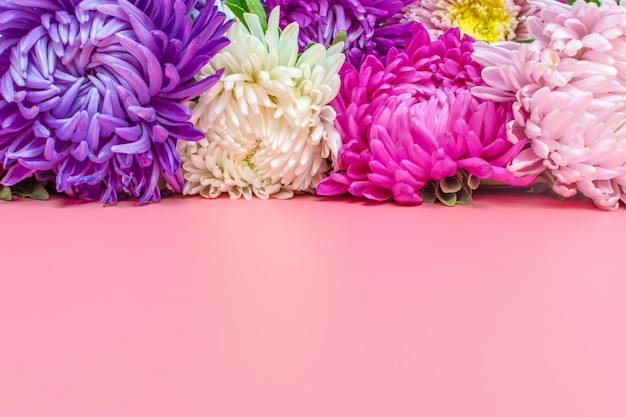 Beautiful aster flowers on pastel pink color background. flat lay.