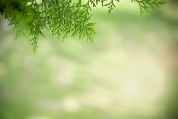 背景として自然の緑の植物の風景、エコロジー、新鮮な壁紙のコンセプトを使用してコピースペースのある庭のぼやけた緑の背景に緑の葉の美しい魅力的な自然の風景。