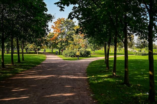 美しい秋の路地。オレンジパーク。木の間の美しい道。