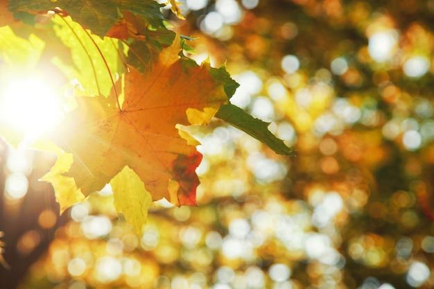 Красивый осенний фон с желтыми и красными листьями.