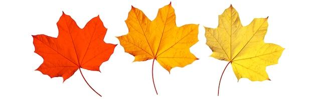 黄色と赤の葉と美しい秋の背景。