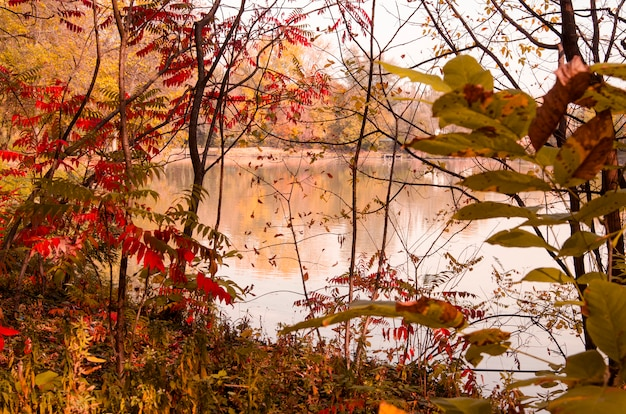 Beautiful autumn colorful plant landscape on the lake shore
