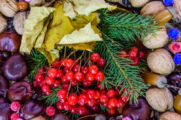 ガマズミ属のベリーとナッツの美しい秋の構成