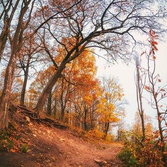 丘の上の赤い木と美しい秋の霧の風景。ソフトフォーカス。正方形のフレーム。