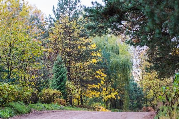 美しい秋の森と道路木々の明るい黄色の葉自然な背景