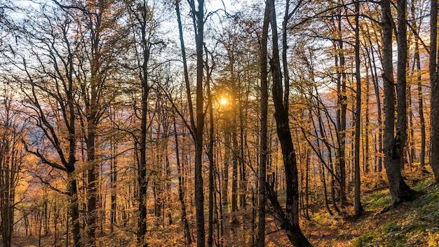 아름다운 가을 숲. 러시아 크라스나야 폴리아나