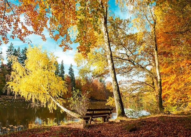 아름 다운가 숲 풍경입니다. 자연 공원에서 가을. 따뜻한 날씨