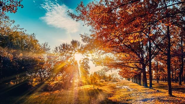 夕日と明るい黄色の紅葉に照らされた美しい秋の森