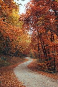 Красивый осенний лес горной тропе