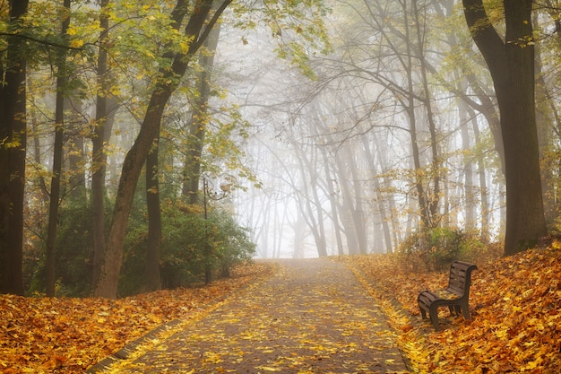 美しい秋の森や都市公園の風景と霧