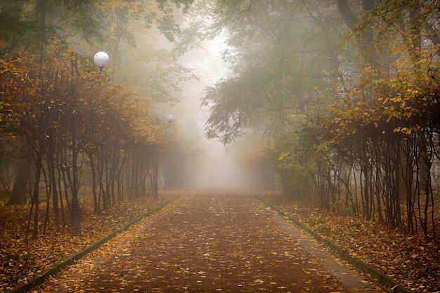 Красивый осенний лес или городской парк, пейзаж и туман
