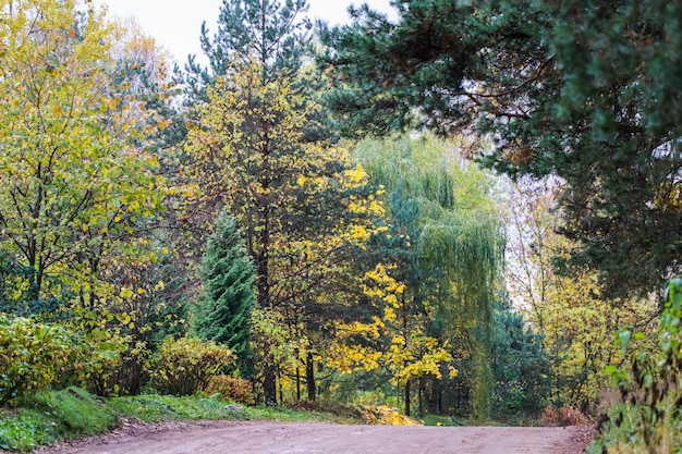 Beautiful autumn forest and road bright yellow leaves of trees natural background