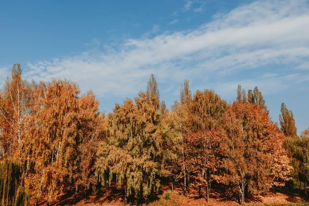 푸른 하늘과 아름다운 가을 숲