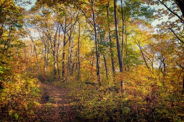 Красивый осенний лес с разноцветными деревьями и узкой тропинкой