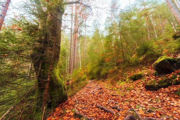 Красивый осенний лес с тропинкой