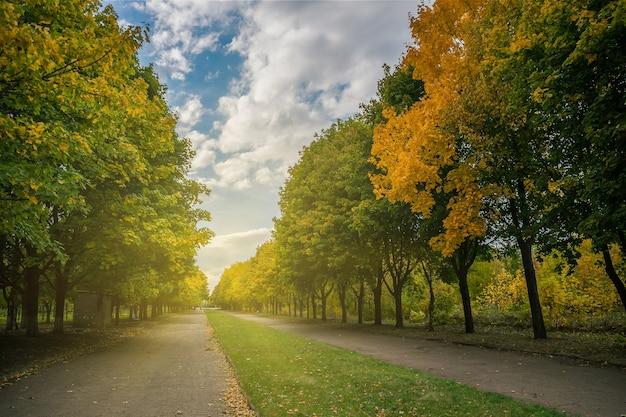 公園の美しい秋