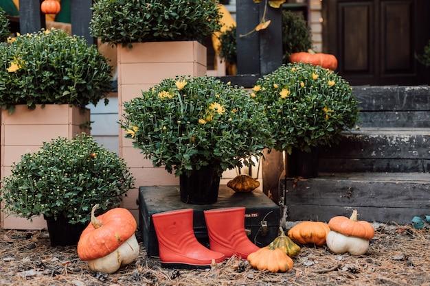 カボチャと菊のある庭の美しい秋のインテリア