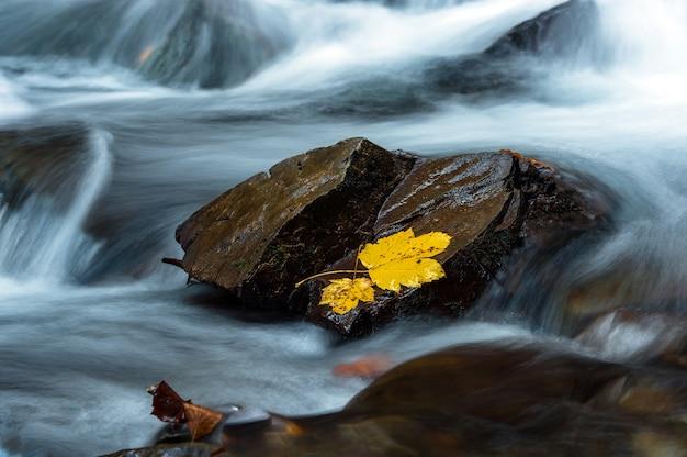 山の美しい秋の風景森の中のカルパティ