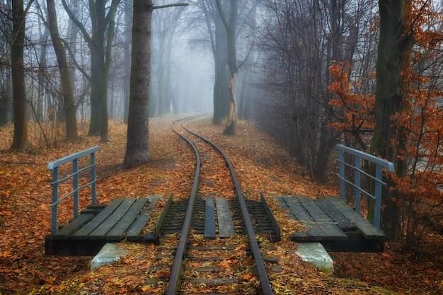 美しい秋の風景。森の中の線路と橋
