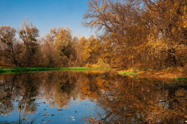 Beautiful autumn landscape of the river and golden forest