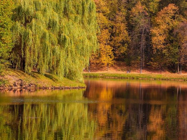 水辺に大きく広がる柳のある美しい秋の風景。ツァリツィノ、モスクワ。