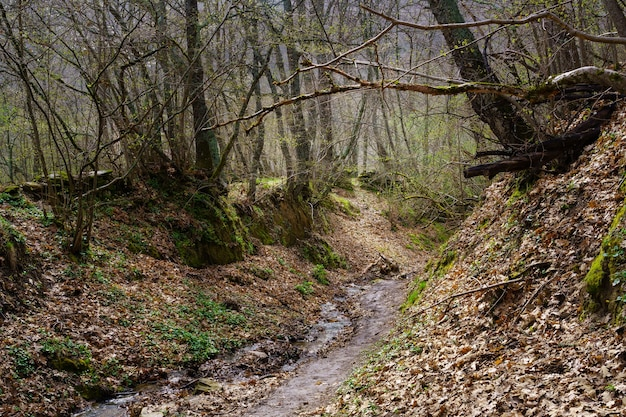 裸の木の枝と小川と葉で覆われた小道のある美しい秋の風景