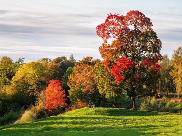 丘の上の赤い木々と美しい秋の風景