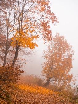 Красивый осенний пейзаж с деревьями и туман на склоне горы.