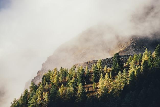 濃い低い雲の中で太陽に照らされた金色の岩を望む山に黄色いカラマツのある美しい秋の風景。雲の間の岩の上に金色の日光の下で針葉樹とカラフルな山の風景。 Premium写真