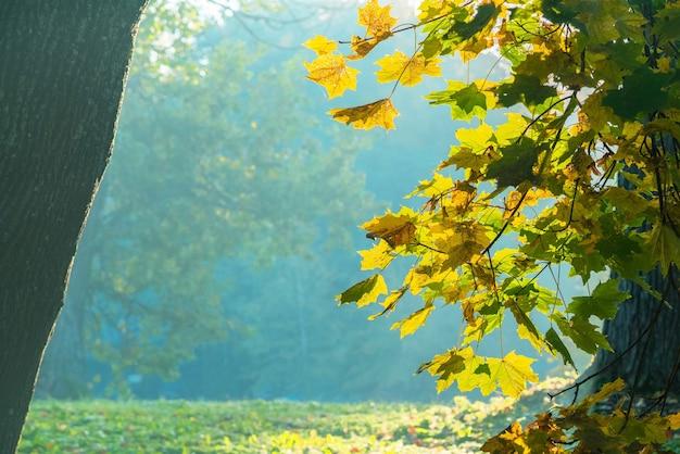 Красивый осенний пейзаж с желтыми листьями деревьев