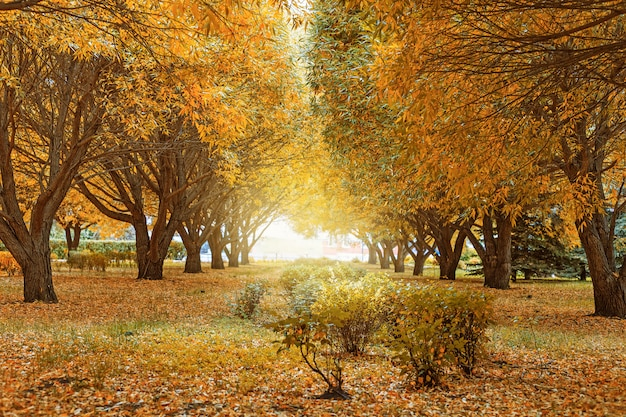 Beautiful autumn landscape. yellow and green trees willow.