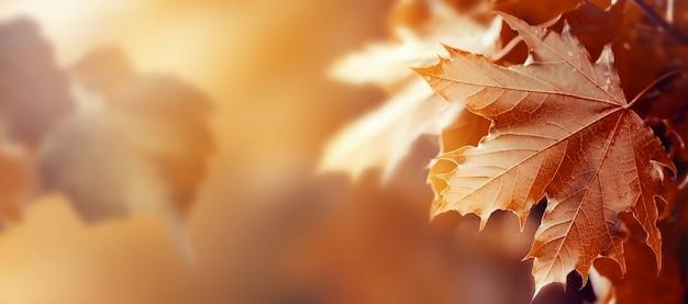 Bei autunno foglie su autunno sfondo rosso sunny daylight toning orizzontale