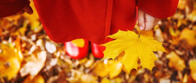 Beautiful autumn leaves. golden autumn. selective focus.