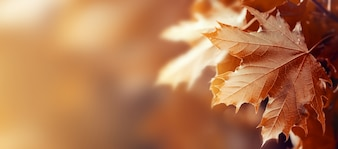 Beautiful Autumn Leaves on Autumn Red Background Sunny Daylight Horizontal