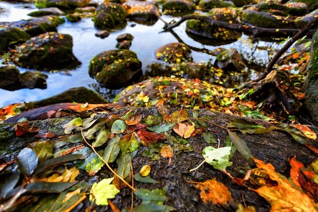Красивые осенние листья на больших камнях в воде
