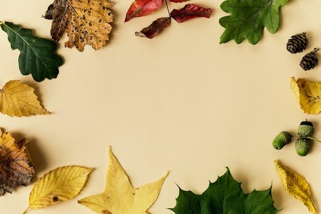 Красивые осенние листья на пастельном фоне