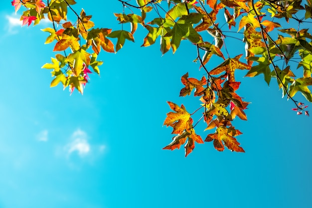 Beautiful autumn leaves and sky