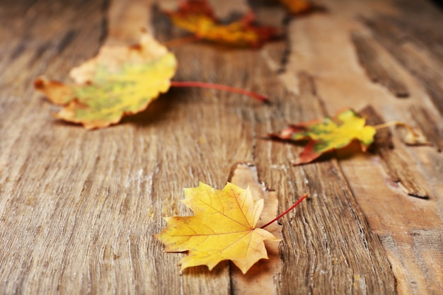 Beautiful autumn leaves on wooden