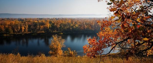 Красивые осенние кленовые листья. осенний лесной пейзаж. осеннее время сезона фон.